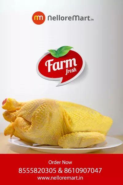 Layer Chicken